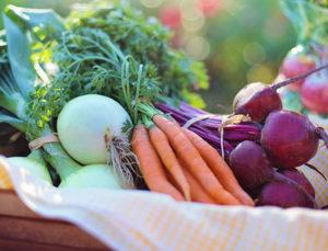 Winter Root Vegetables - Rose Hauling, Barboursville, VA